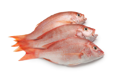 Malian free domain name offer backfires badly broadband for Names of fish to eat